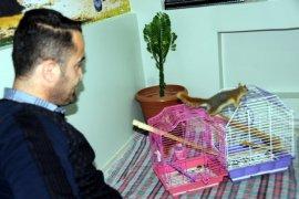 Bulduğu yavru sincapları hayata bağladı