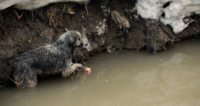 Dere suyunda mahsur kalan köpeği itfaiye ekipleri kurtardı