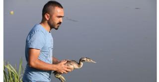 Yaralı balıkçıl, tedavi sonrası doğaya bırakıldı